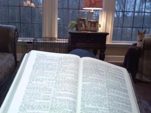 Bible studying